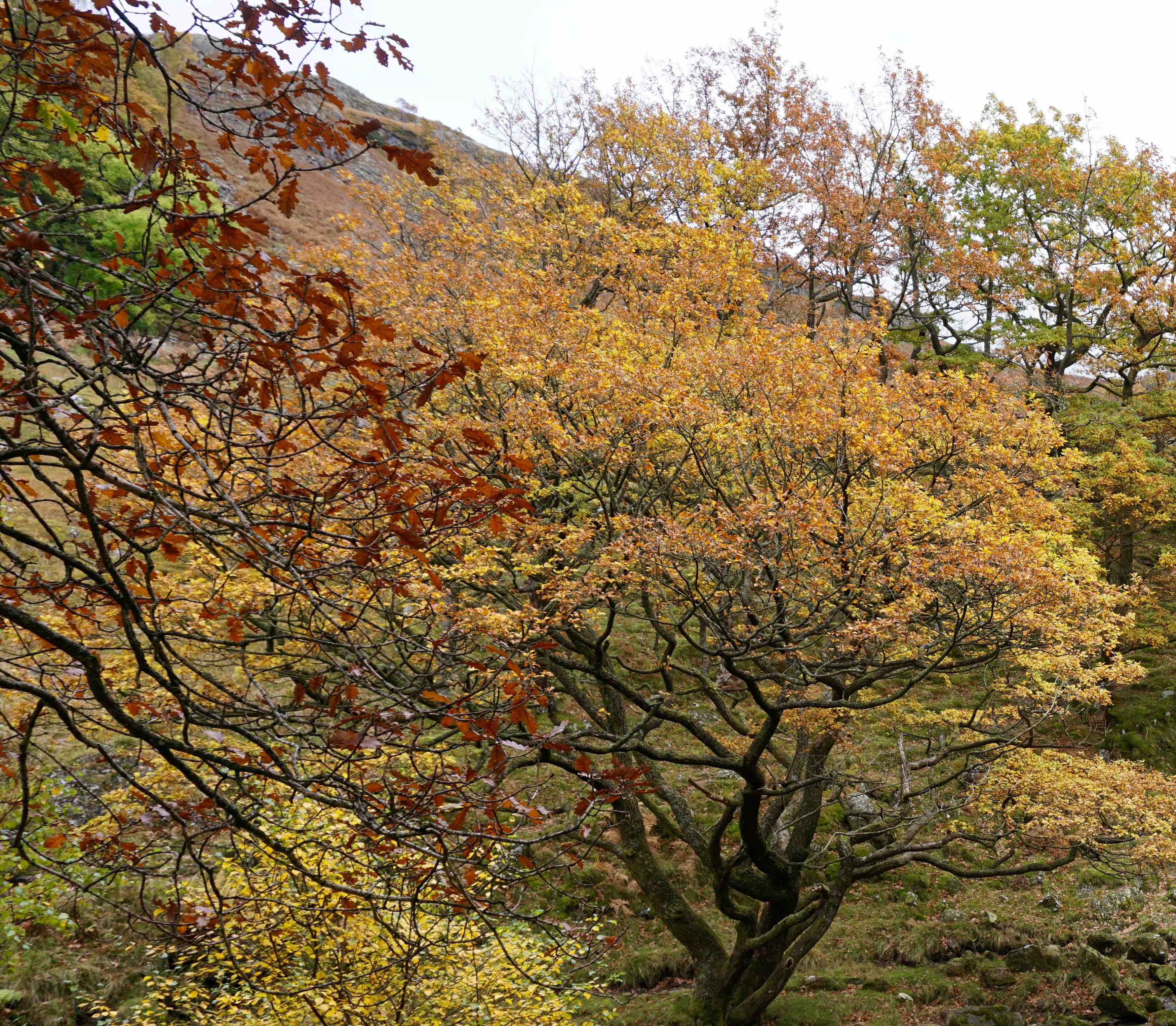 Autumn colours in north Cumbria